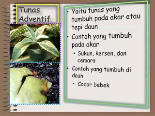 Contoh Tumbuhan Yang Berkembang Biak Secara Vegetatif Alami Bagikan Contoh