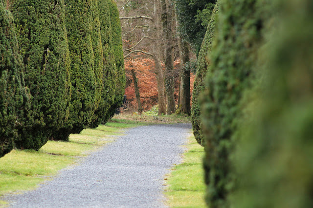 Emo Court Tree Avenue