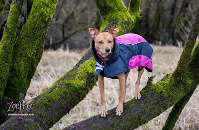 Ultimate Warmer Dog Coat