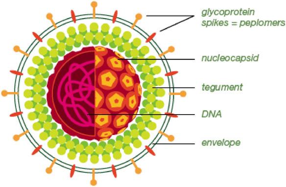 cara menyembuhkan herpes anah