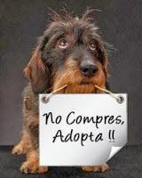 NO compres, Adoptá