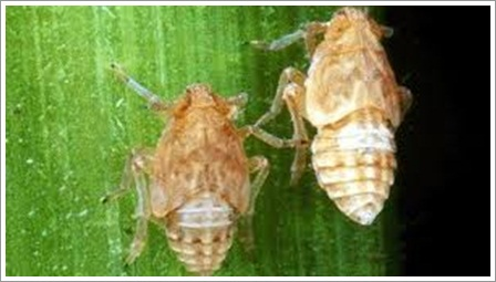 https://caracepatmembasmihamawerengampuh.blogspot.com/2018/11/pestisida-alami-untuk-mengatasi-hama.html