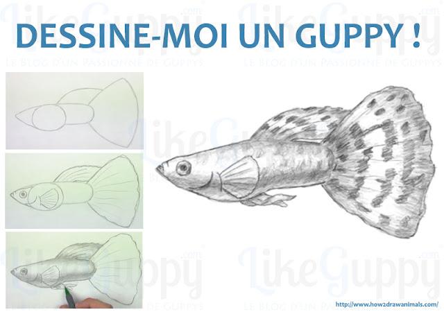 apprendre-a-dessiner-un-guppy-cest-facile