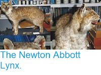 http://sciencythoughts.blogspot.co.uk/2014/09/the-newton-abbott-lynx.html