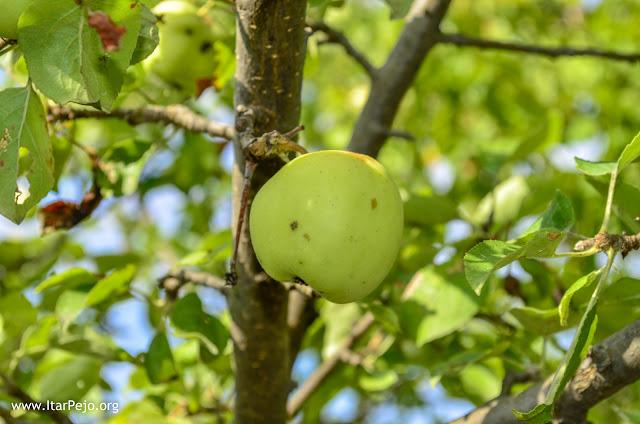 Green Apples, Mariovo region