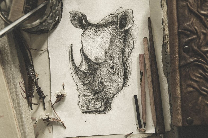05-The-Rhino-Mike-Koubou-Stylized-Sketchbook-Animal-Pencil-Drawings-www-designstack-co