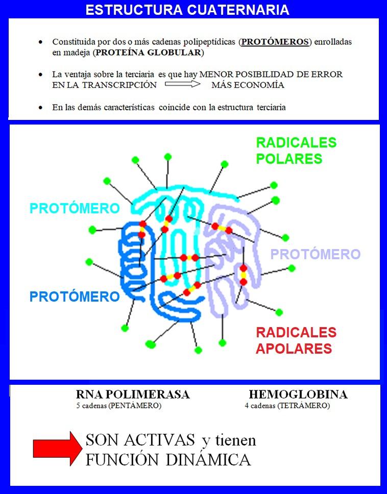 Curiosidades Científicas Estructura Cuaternaria De Las