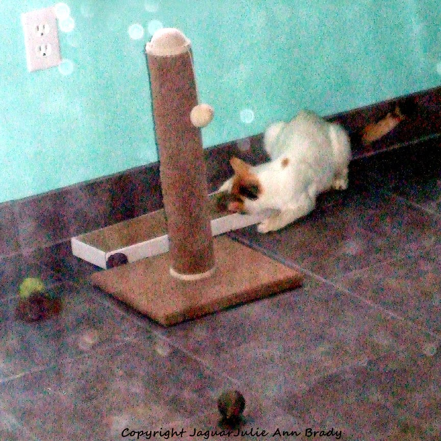 Mommy Cat on Pet Luv Cat Scratcher Board