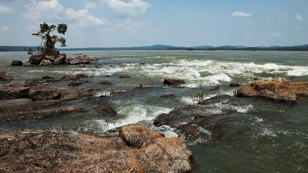 Biodiversidade Desconhecida no Brasil