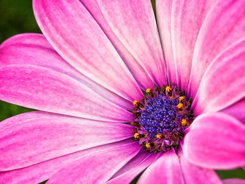 Macro Flowers Photos