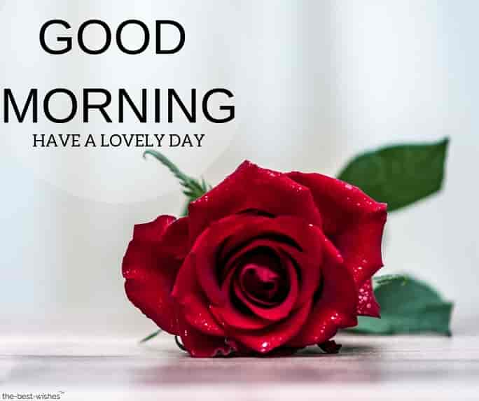 good morning wishes with red rose