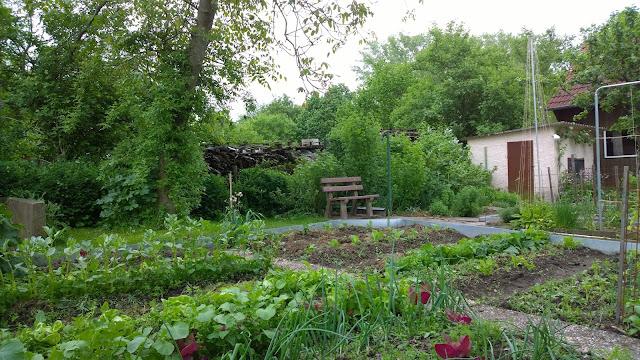 Mischkulturgarten Gemüsegarten im Mai (c) by Joachim Wenk