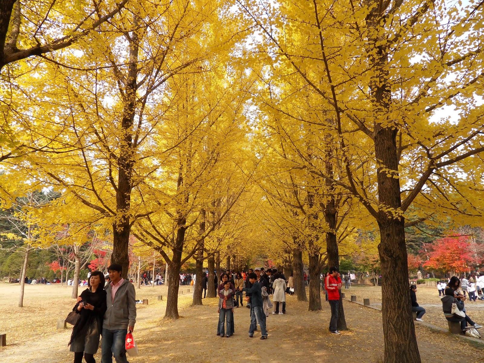 Daftar 6 Tempat Wisata Terpopuler di Korea Selatan ...
