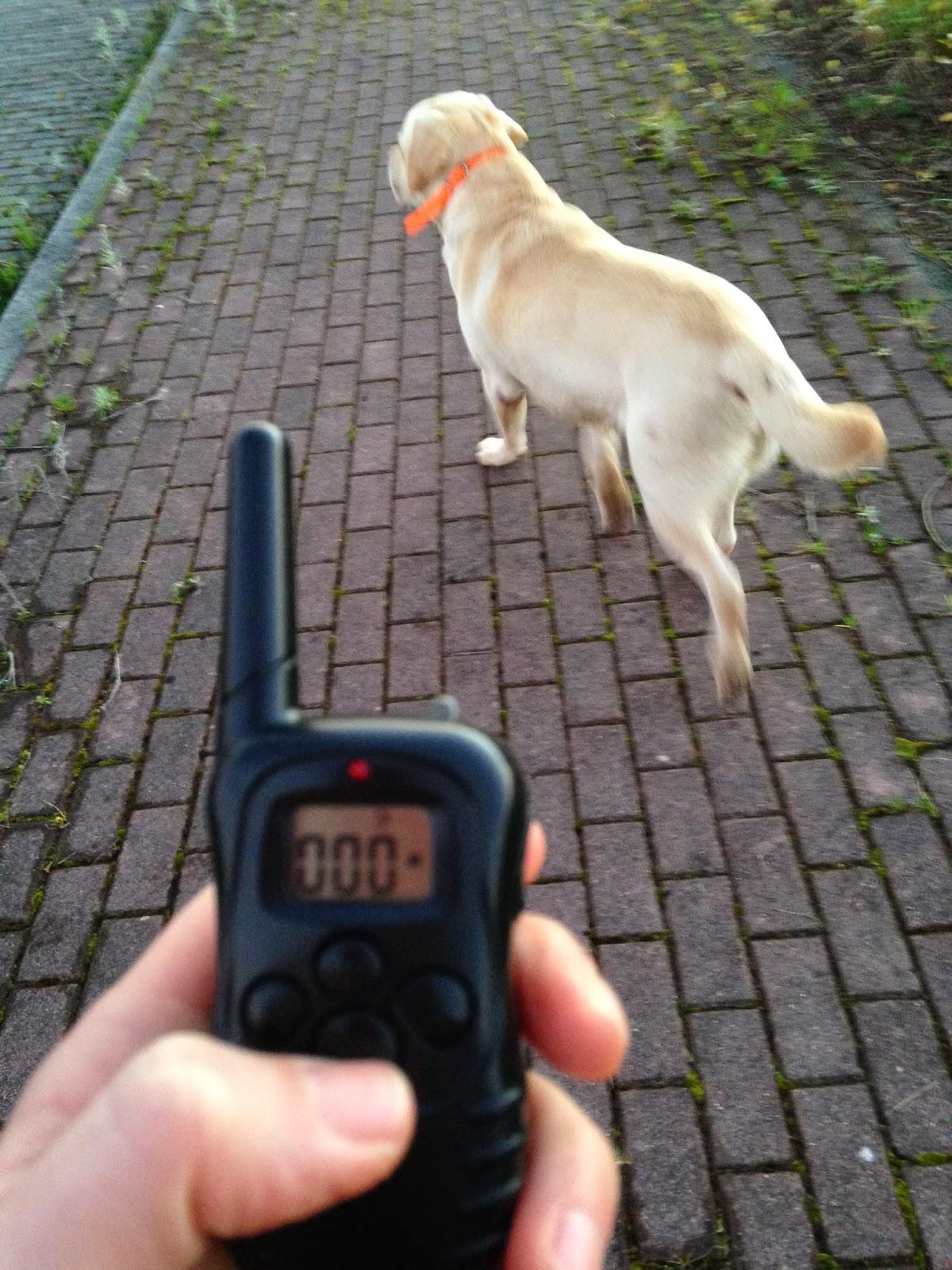 Resultado de imagen para perros con collares electricos