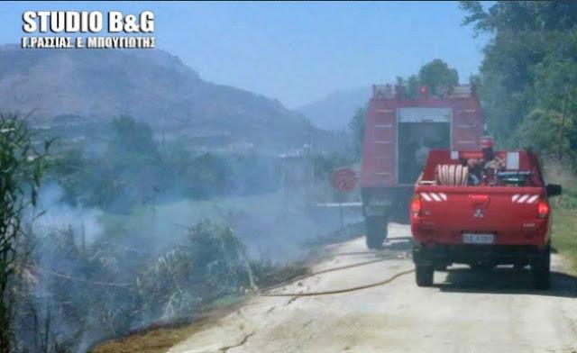 Αργολίδα: Πυρκαγιά στη Νέα Κίο