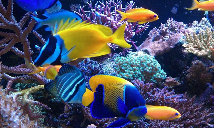 Ternyata, Ikan adalah Makhluk Pertama yang Terbang di Bumi