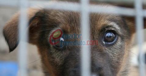 Medios: Se receptan donaciones para animales afectados por terremoto
