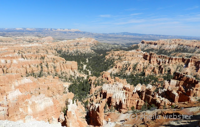 a view of the trees and hoodoos from Sunrise Point