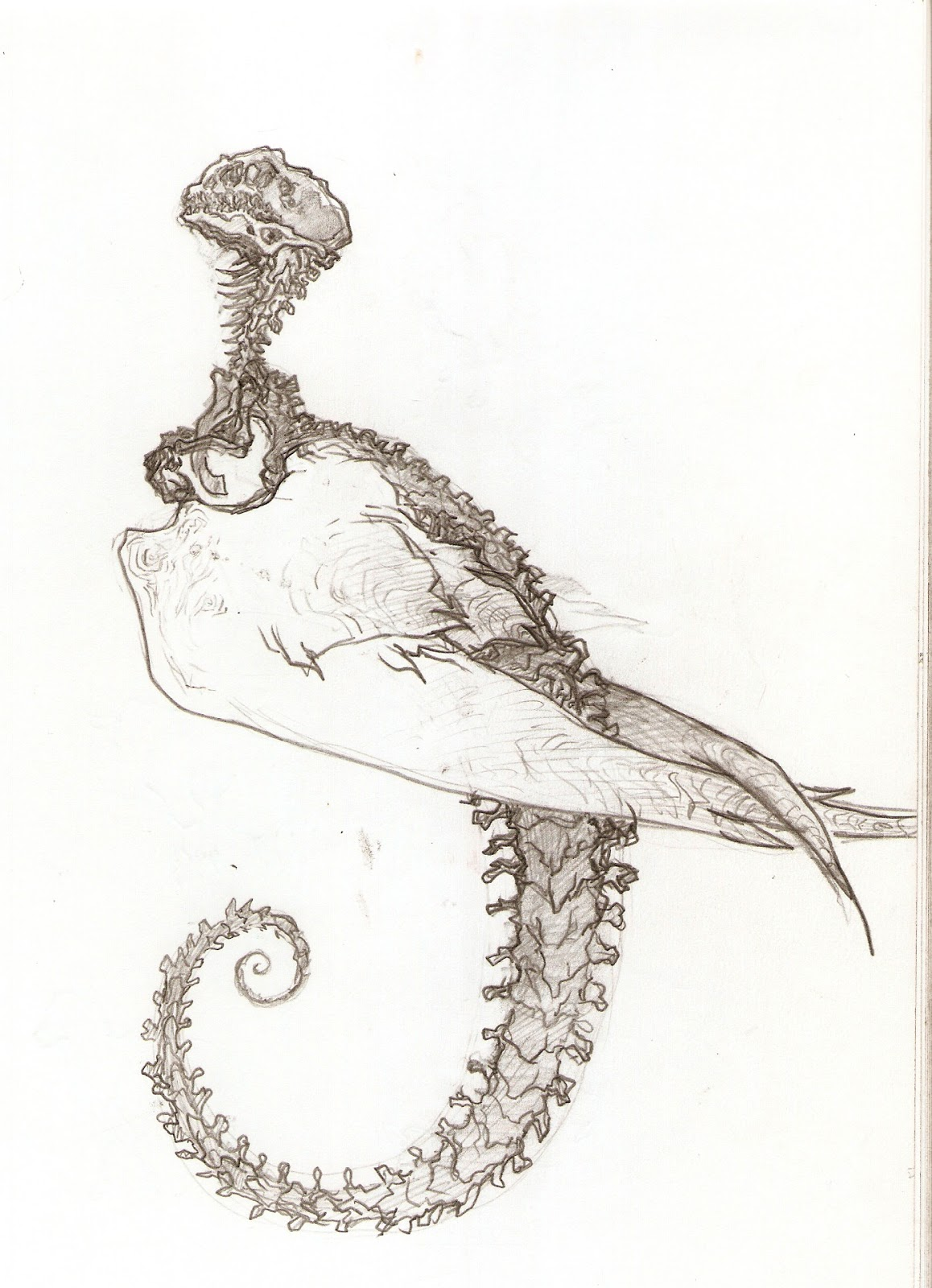 Ostrich Skeleton Diagram L4 Nerve Pain Wing Claws Related Keywords