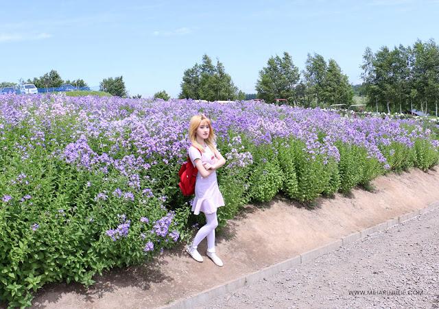 Hokkaido Lavender Fields