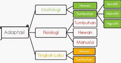 Contoh Soal Fisiologi Manusia, Hewan dan Tumbuhan Kunci Jawaban