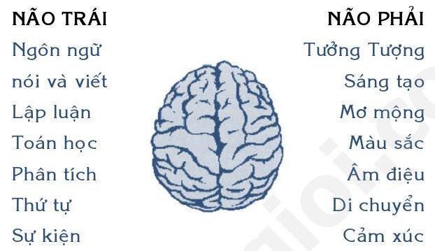 những hiểu biết về não trái và não phải