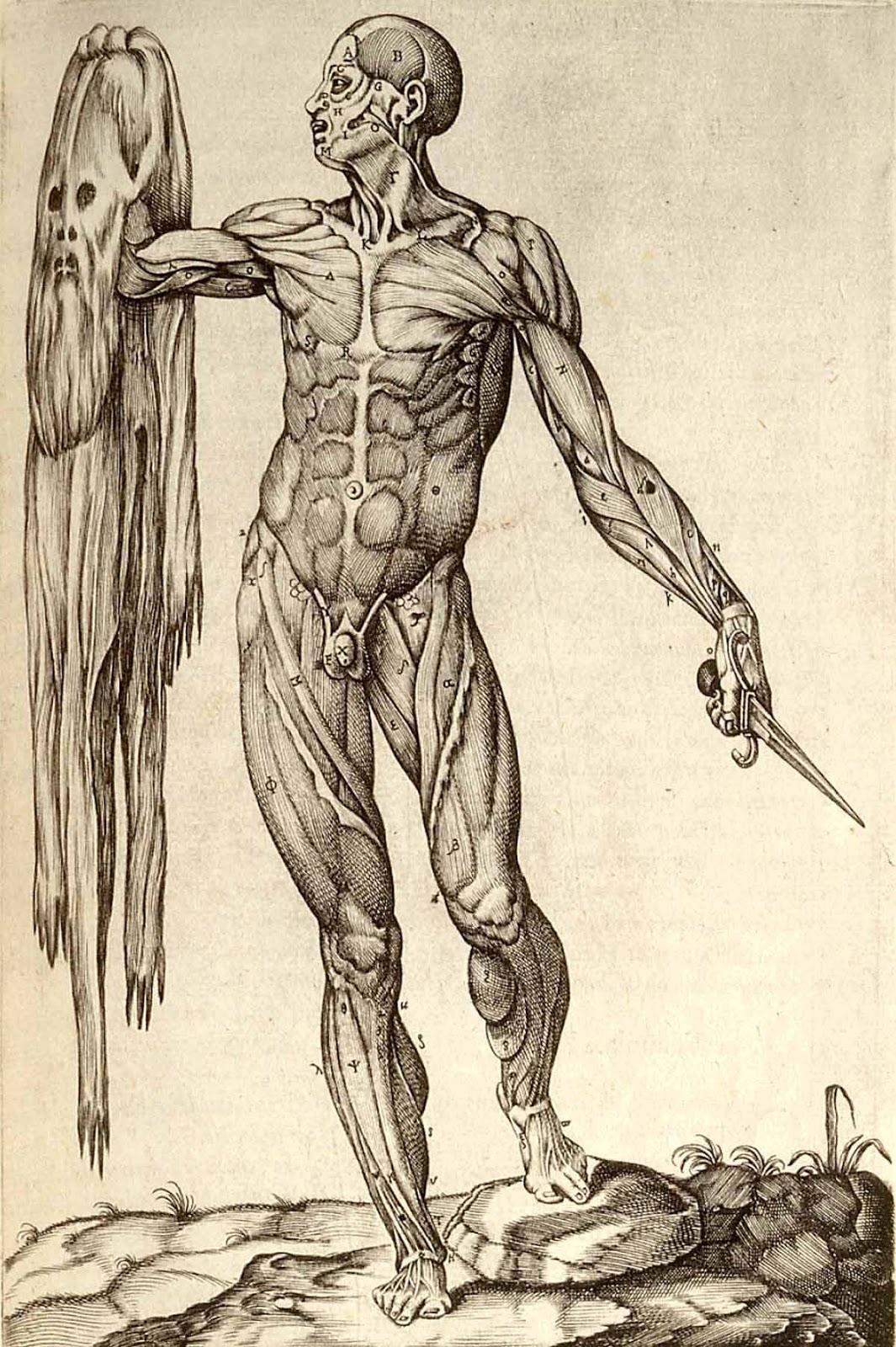 Asombroso Dibujos Anatomía De Leonardo Da Vinci Ideas - Imágenes de ...