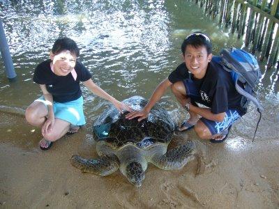 Kura kura Bali