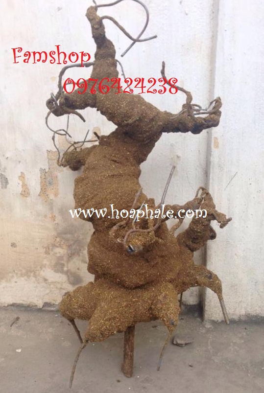 Goc bonsai mai dao the mau tu tai Hoang Minh Giam