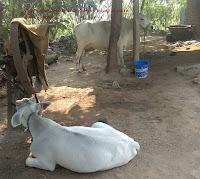 Deyari farming kya hai? Deyari udyog se lakho rupees kamaye……………