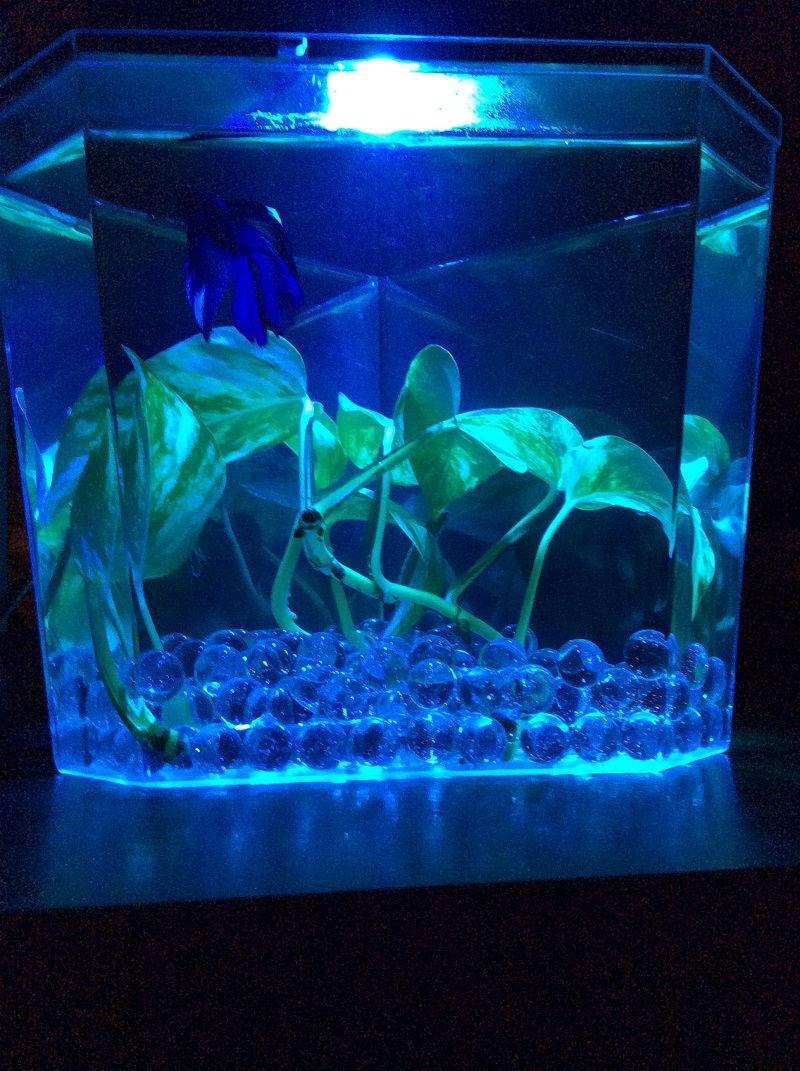 Image Buying Betta Fish Care Lighting