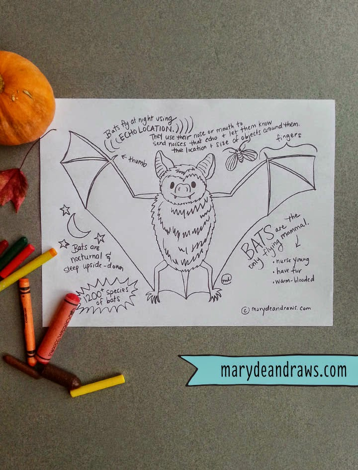 Bat Facts Printable Coloring Page