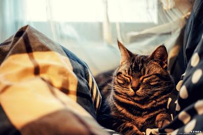 Cute Cats Kitty Pets 17
