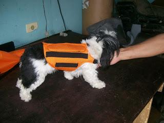colete redutor de movimento para cães