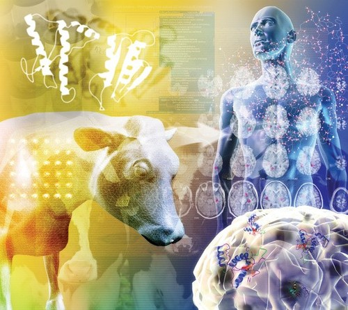Коровье бешенство: причины заболевания, что такое прионы, коровье бешенство у людей