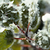 Tips on How to Protect Your Plants From Frost