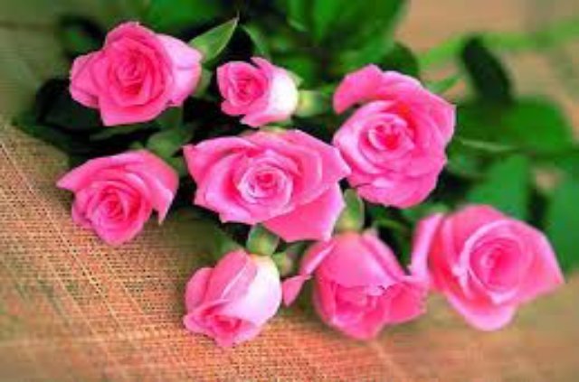 SUPER AND NICE PINK FLOWERS WALLPAPERS HD IMAGES FOR DESKTOP OR ANDROID