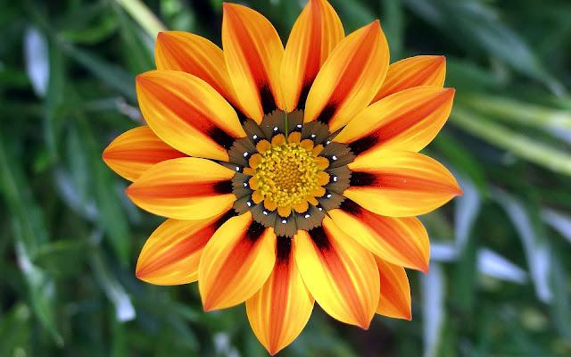 Close up van een mooie bloem