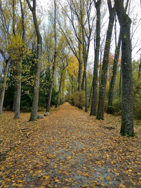 Paseo-bosque-finlandés