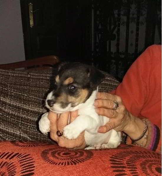 cachorro de tamaño pequeño 3
