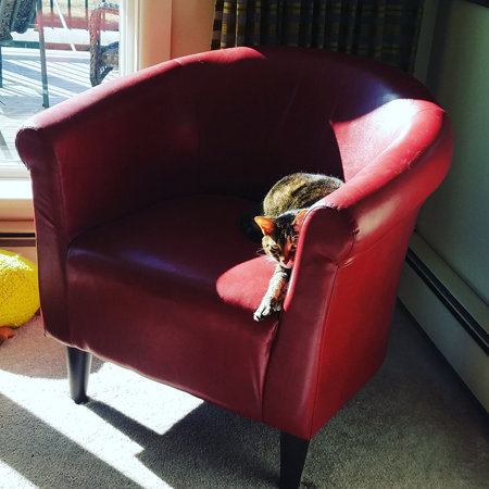 image of Sophie the Torbie Cat lying in a red chair in the sunshine, looking up at me