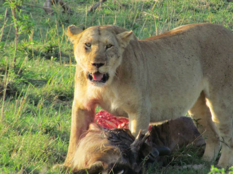 Mis ojos viajeros: Guia animales en Masai Mara (Kenia)