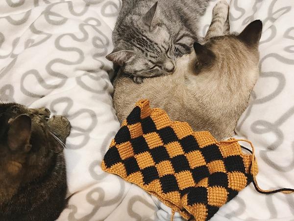 ふとんの上に群がって暖をとる猫3匹