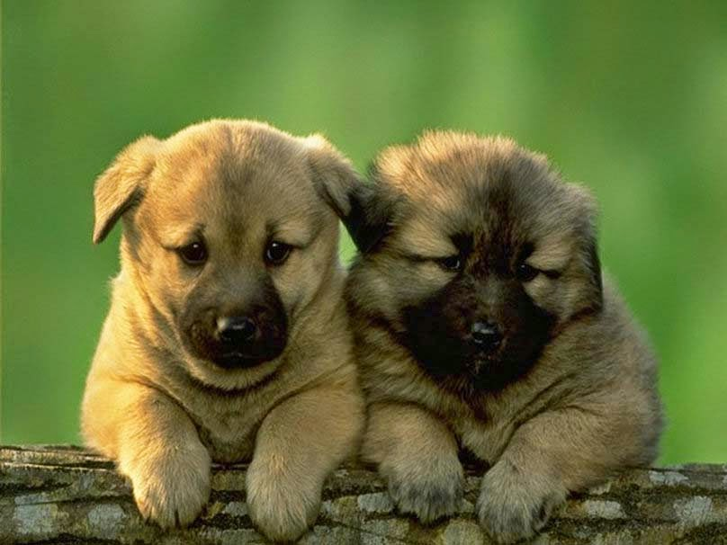 cute-dogs-image