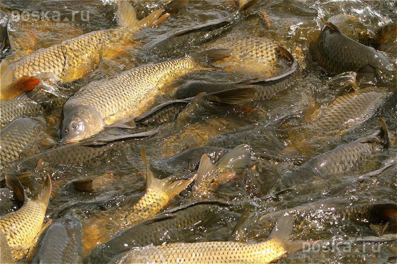 Где купить рыбу по оптовым ценам