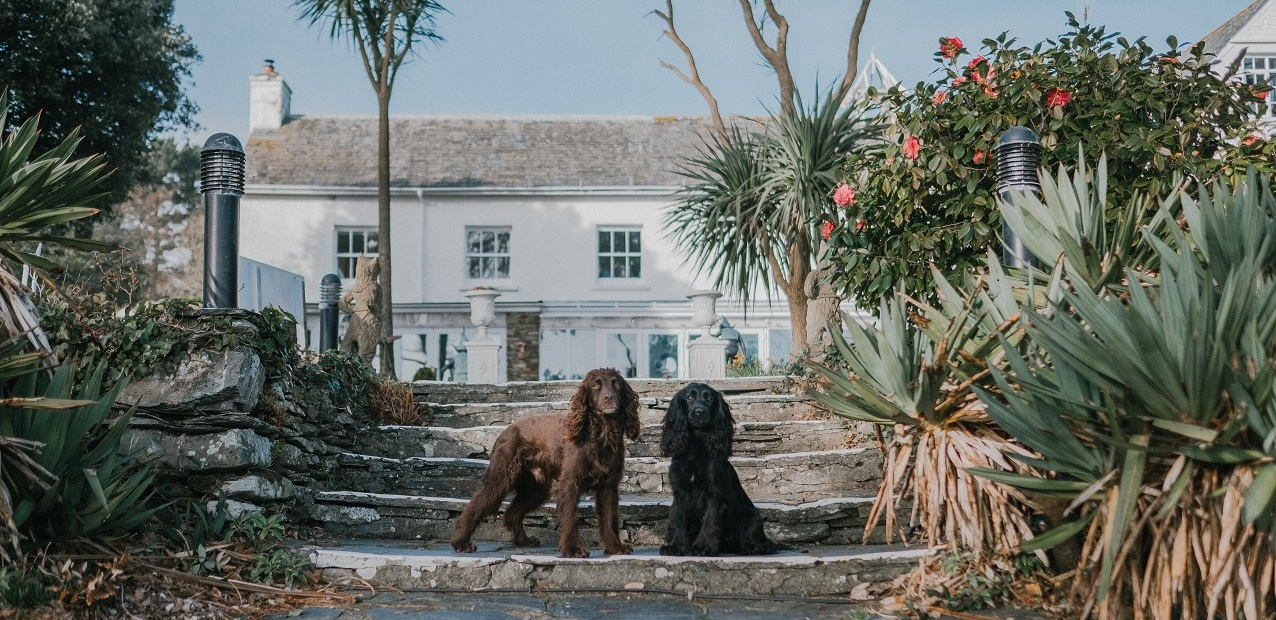Talland Bay Dog Friendly Hotel