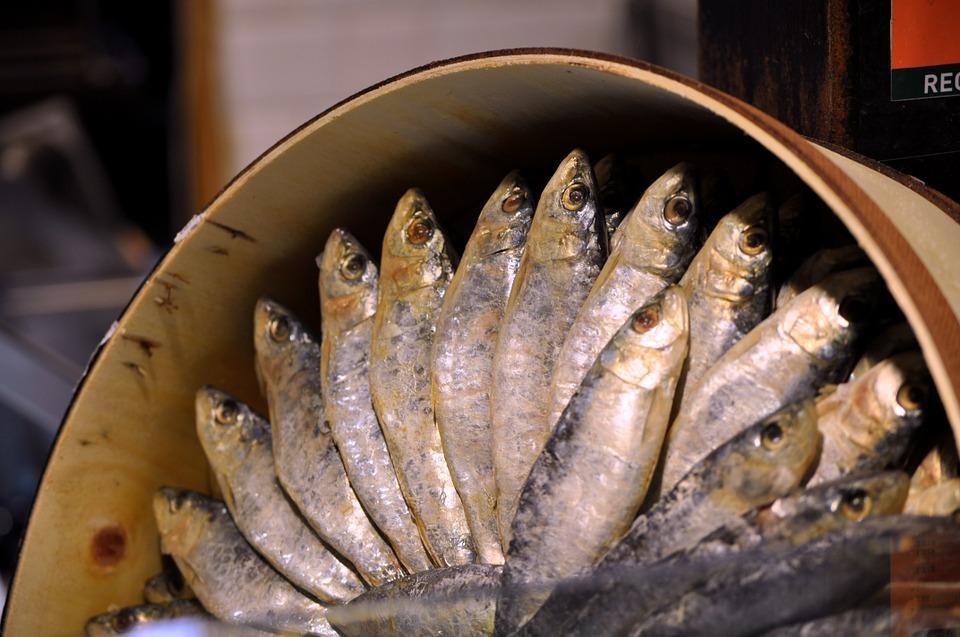 Resultado de imagen de sardina de bota estraza