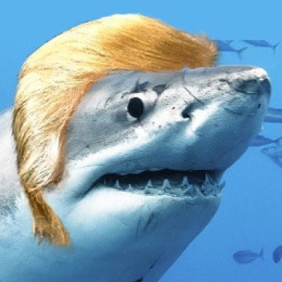donald trump shark