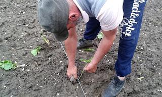 efectuarea gropilor in vederea plantarii cu sadilul de lemn