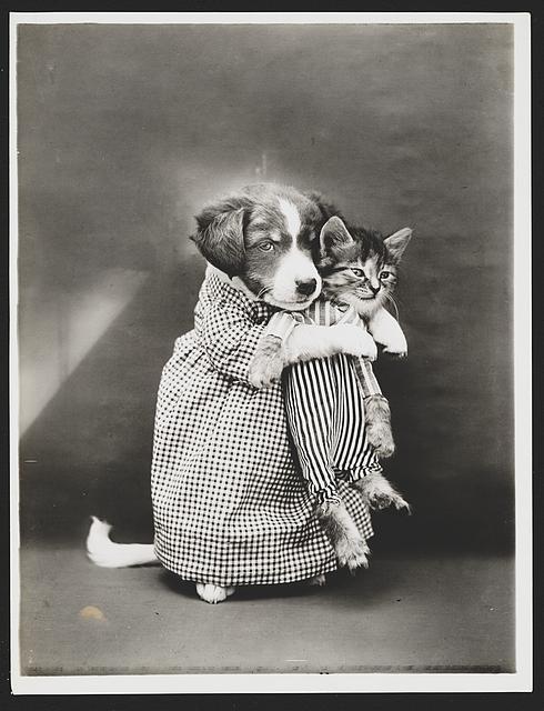 Anjing Perawat Kucing Lucu